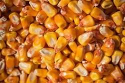 Кукуруза цельная - фото 5304
