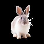 Комбикорм для кроликов ПЗК-91